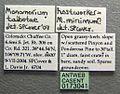 Monomorium talbotae casent0173041 label 1.jpg