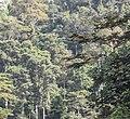 Montane rainforest near to Sérédou (Northern limit of Ziama Massif).jpg