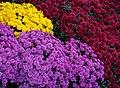 Montpelier Flowers (6235842176).jpg