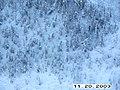 Moose Survey, Yukon-Charley, 2003 2 (a5ef0c8a-f24b-40f9-87ed-69e455d4a38a).jpg