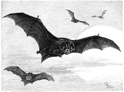 Mopsfledermaus-drawing.jpg