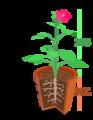 Morfologia vegetal, estruturas.png