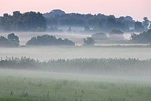 Morgennebel in der Oberalsterniederung
