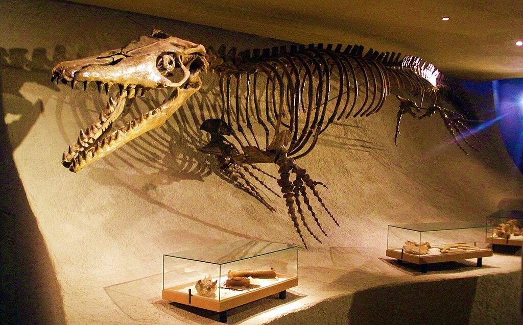 Mosasaurus hoffmannii - skeleton.jpg