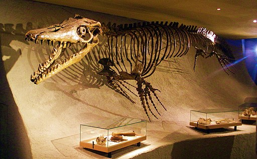 Mosasaurus hoffmannii - skeleton
