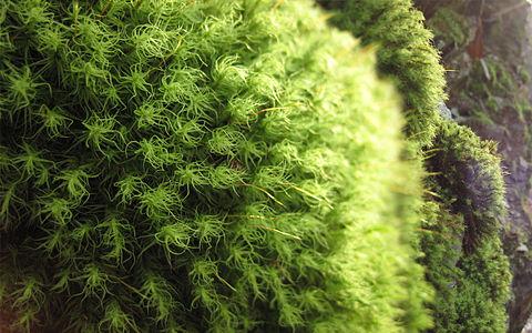 macro shot of moss
