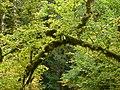 Mossy branch - panoramio.jpg