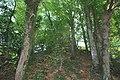Motte et donjon de Chevré.jpg