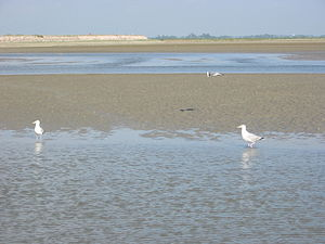 Somme (river) - The estuary is now much smaller than it once was but still extensive.
