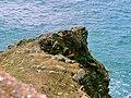 Mull of Galloway - panoramio (20).jpg