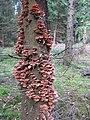 Mushroom-IMG 4592.JPG
