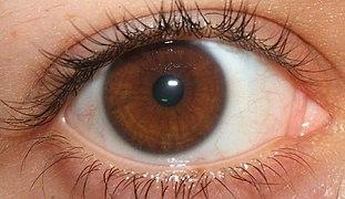 Dark Eyes Natural Makeup