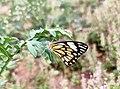 My garden Butterflies 01.jpg
