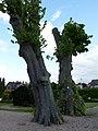 ND B.9.6 Lindenallee Preußisch Oldendorf 11.jpg