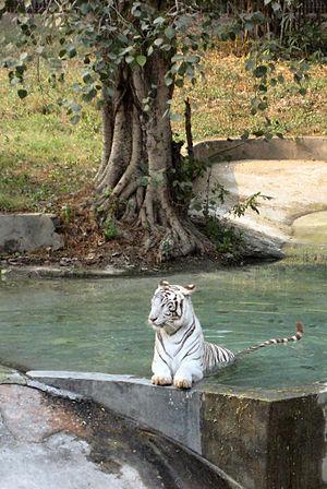 National Zoological Park Delhi - National Zoological Park, Delhi