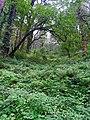 Nainital, Uttarakhand, India - panoramio - Vipin Vasudeva (4).jpg