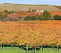 Napa valley vineyard and winery.jpg