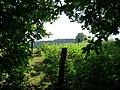 Naturdenkmal Hasequelle Wellingholzhausen Melle -Wald Ausgang- Datei 2.jpg
