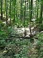 Naturpark Schönbuch, Tal beim kalten Brunnen - panoramio.jpg