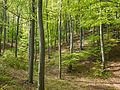 Naturschutzgebiet Nr. 158 Greifenstein (Gebiet an der Burg Greifenstein) 6 Sublocation DE-TH WDPA ID 163316 , unterhalb Kesselwarte.jpg