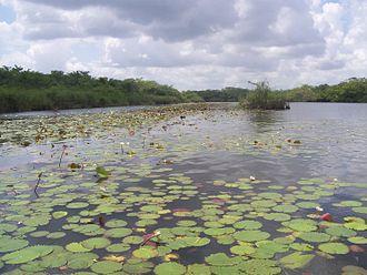 New River (Belize) - New River, Belize