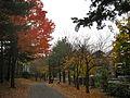 New England leaves (4105916616).jpg