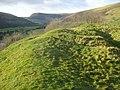 New Radnor Castle earthworks - geograph.org.uk - 680400.jpg