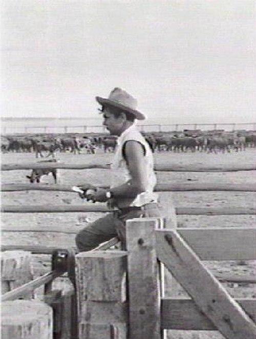 Newcastle Water cattle yard.