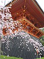 Ninna-ji National Treasure World heritage Kyoto 国宝・世界遺産 仁和寺 京都27.JPG