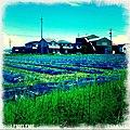 Noda Shinden, Mizuho, Gifu Prefecture 501-0232, Japan - panoramio (2).jpg