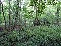 North Plantation near Croxton - geograph.org.uk - 475653.jpg
