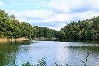 Novodvorský rybník II 02.jpg