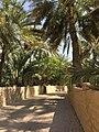 Oasis in Al Ain.jpg