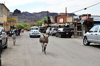 Oatman, Arizona - Burros share the street with cars