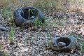 Ohlone Mortar and Pestle at Jasper Ridge 2011.jpg