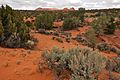 On the way to South Coyote Buttes Paria Canyon Wilderness Area (3448800109).jpg