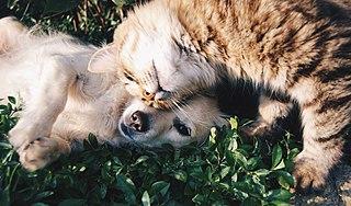 Bunting (animal behavior)