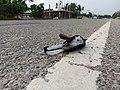 Oriental magpie-robin roadkill 1621694373857 01.jpg