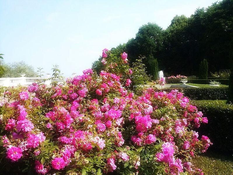 File:Oru pargi roosid.jpg