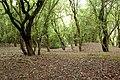 Overgrown spoil tip near Stockton locks - geograph.org.uk - 1304296.jpg