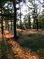 Přírodní park Baba394.jpg