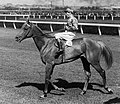 PETER PAN lll VRC MELBOURNE CUP 1932 & 1934.JPG