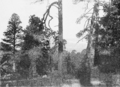 PSM V61 D538 Mount orizaba forest.png