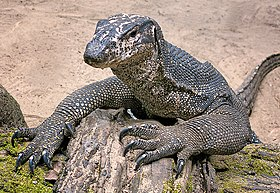 Palawan Water Monitor Lizard on The Beach.jpg