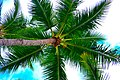 Palm tree flickr.jpg
