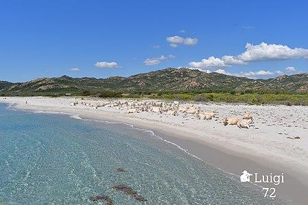 Panoramica sulla spiaggia di Berchida.jpg