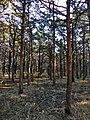 Parallel Forrest.jpg