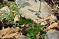 Parc National de Jabal Zaghouan 180.jpg