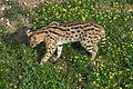 Parc animalier, Friguia, Tunisie, 25 décembre 2015 DSC 1892.jpg