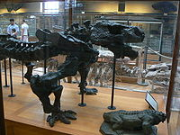 Pareiasaurus baini skeleton side.JPG